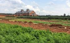 湖北:创建国家现代农业庄园和农垦对外开放合作试验区
