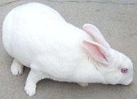 洛南县兔子带着贫困户脱贫