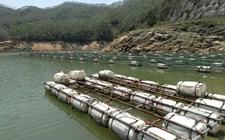 广西陆川:麦芽鱼走俏市场敲开致富大门