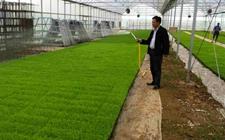 水稻烂秧怎么治?早稻育秧的防治措施
