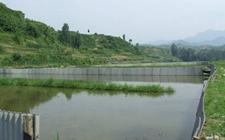 小龙虾养殖:小龙虾养殖基地如何建设