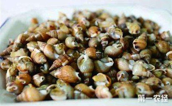 织纹螺,俗称海丝螺、海蛳螺、麦螺或白螺等,主要分布于浙江、福建、广东等沿海地区。织纹螺的外形特征为尾部较尖、细长,长度约为1厘米,宽度约为0.5厘米,约指甲盖大小。织纹螺含有河鲀毒素易导致食物中毒,原卫生部2012年公告(2012年第13号)明确要求,任何食品生产经营单位不得采购、加工和销售织纹螺。当前正值食用螺销售旺季,近期国家食品安全风险监测发现仍有织纹螺在市场销售,且抽样检出含有高含量河鲀毒素。河鲀毒素中毒可引起头晕、呕吐、口唇及手指麻木等症状,严重者可致死亡,中毒潜伏期一般在10分钟至3小时。