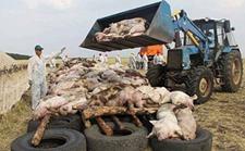 农业部紧急发布非洲猪瘟疫情风险防范工作通知