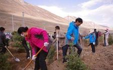 青海:每年将完成400万亩植树造林任务