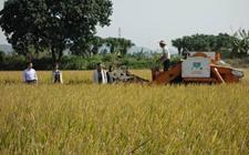 "<b>广东江门:推进农业供给侧改革 ""三步走""促向农业强市发展</b>"