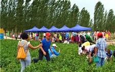 甘肃庄浪:推进农业与旅游产业的深度融合 助力群众脱贫