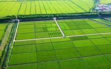 广东秀田:高标准农田建设让农业生产蒸蒸日上