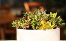 多肉植物怎样选择花盆?这是资深肉友的经验之