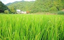 宁夏:加快推动循环型农业产业体系的构建