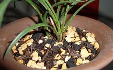 栽兰花怎么配土最好?兰花配土植料的选择