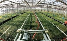 <b>金沙江发展智慧农业 打造绿色为植物工厂</b>