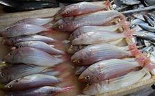 海南:鱼蟹中添加违禁物 10批次不合格水产品被通报