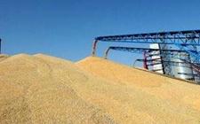 多部门联合发布2017年小麦稻谷和油菜籽收购工作安排
