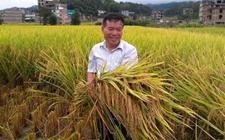 广西:粉垄绿色农业治霾增产有奇效