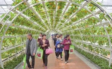 山东寿光:农业科技更接地气,促进农业科技成果的应用
