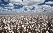 农业科技时代 从机械化生产棉花到数字化生产