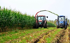 2017年青贮玉米生产技术指导意见助力玉米种植改革