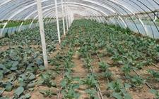 宁夏:加强和规范设施农业用地管理