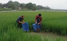 湖南南县:推行稻虾种养模式 打造稻虾百亿产业