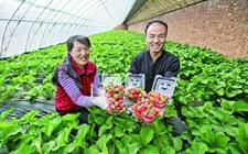 内蒙古:全面发展城郊型绿色瓜果蔬菜种植产业