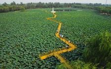 江苏宿迁:建设生态农业经济带动农民增收