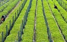 陕西西安:农业标准化示范区已建成39个