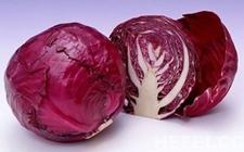 新品种甘蓝:抗病强效益高促进了农民的增收