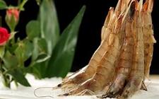 基围虾怎么养?基围虾的养殖技术
