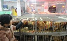 农业部加强H7N9流感防控工作 切实保障养禽业生产安全