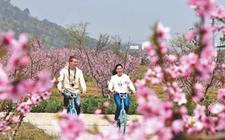江苏无锡:以桃树为纽带打造蜜桃小镇 让传统农业全链条升值
