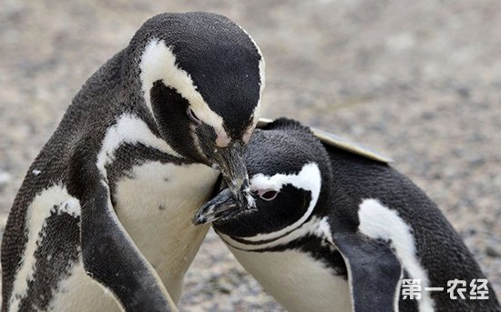 动物园,企鹅