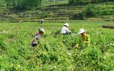完善农产品和农村市场体系建设