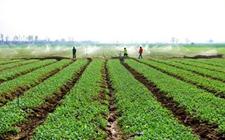农业项目申报怎么处理?获得农业支持的项目有哪些?