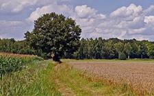 五种变动农村土地怎样处理?户口与农村土地确权的关系