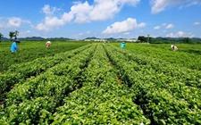 广西横县:构建特色垃圾分类处理机制助力农业发展