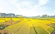 """广东:印发农业现代化""""十三五""""规划 加快农业可持续优化发展"""