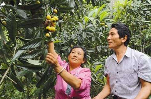 洛桑:种植高效益农作物才是致富好门路