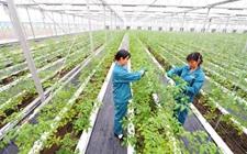 农业部办公厅发布农业产业化示范基地建设要求