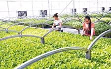发展四大农业类型可享受国家资金补贴