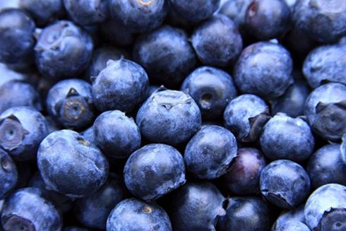 任井龙研究蓝莓18年带着林丰百姓致富