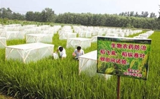 5月炸青岛举行第八届生物农药交流会