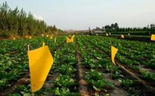 广东:落实农药使用量零增长行动方案