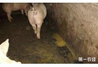 养猪场流行性腹泻治疗方案