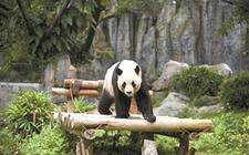 五一小长假迎来许多动物加入深圳动物园 海归熊猫将与游客见面