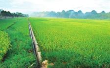 财政部落实全国各地农业综合开发资金和项目重点监控工作