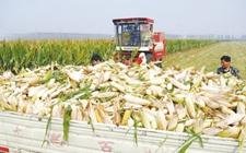 黑龙江:铁路外运粮食总量达305亿斤