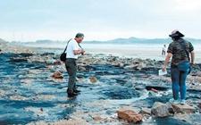 福建惠安:发现国内已知纬度最高的海底古森林遗迹