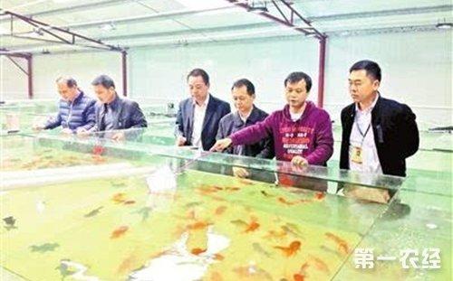 广东云浮平台镇养殖淡水鱼致富