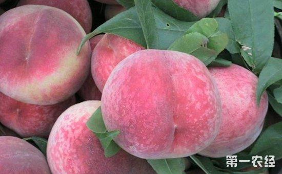 食安知识:桃子西瓜同吃会中毒?专家直言:从来没听说过