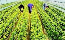新型农业经营主体有哪些?农业经营怎么做最赚钱?